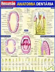 Resumão: Anatomia Dentária - Maria Ignez T. Franca